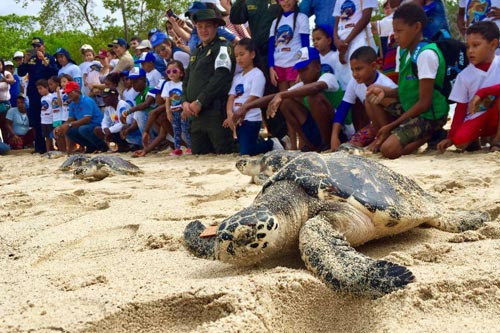 Turtle on the Beach with Children in the background