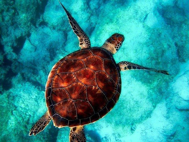 Symbolism Of Turtle Ocean Jewelry Store